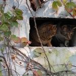 Outdoor Enclosure Day 1